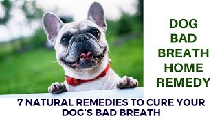 Dog bad breath home remedy | 7 Natural Remedies to Cure Your Dog's Bad Breath