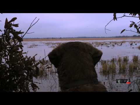 Duck Hunting The Bayou Metto Lodge In Stuttgart, Arkansas