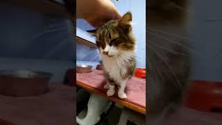 Kass Ferdi Valga varjupaigast