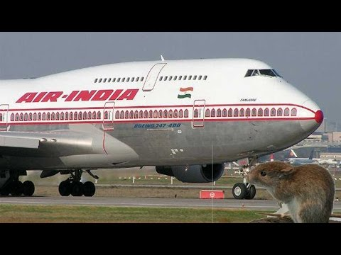 London bound Air India flight called back, rat sighting onboard