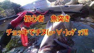 くーねるさんの影響で年がいもなく魚突きを始めました(^^)/ 瀬戸内海な...