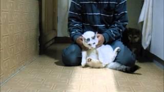猫に対しても、攻撃したり、必要以上に興味を持たないように育てます。