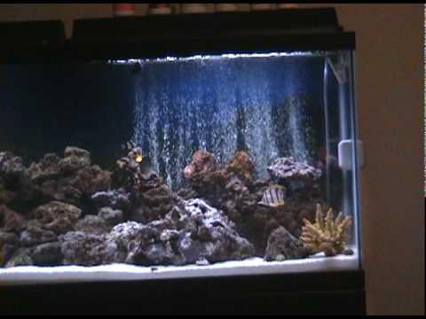 Part 1 my 55 gallon marine salt water aquarium coral reef for Saltwater fish tank lights