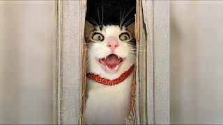 Смешные видео про кошек и котов Ноябрь 2019 Смешные коты и кошки приколы 2019 funny cats #106 Выпуск / Видео