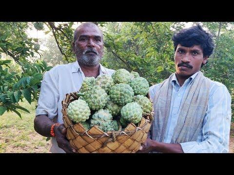 Grandpa's Custard Apple Farm and Fresh Fruits Eating in my village | Village Vlogs