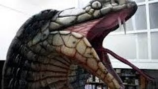 Repeat youtube video ที่ใหญ่ที่สุดงูหลามงูยักษ์อนาคอนด้า,สัตว์ยักษ์