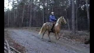 gold palomino twh tennessee walking horse 5yo 15 2 hh