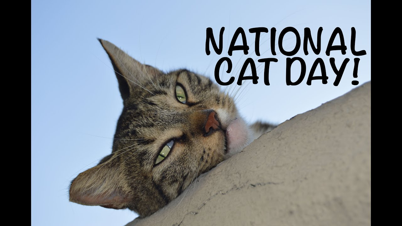 Nine reasons to adopt a kitty on National Cat Day