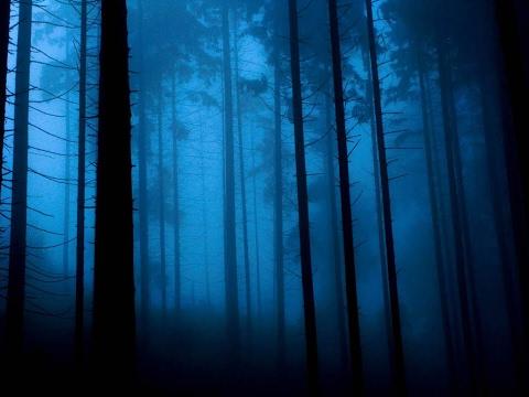 [СОЗДАНИЕ ИГРЫ ЗА 10 МИНУТ] Horror – Forest | Unity 5