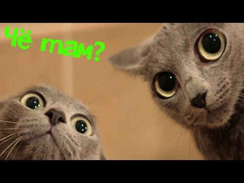 Кошки могут видеть то за 29 января