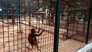 Image of: Funny Animal Bangal Funny Videos 2016banor Ki Are Gace Doer Bangla Funny Video Download 3gp Clip Ready