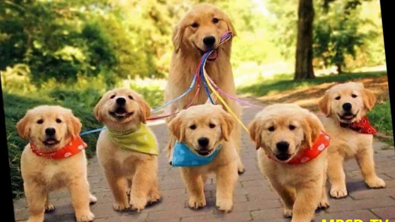 Top 20 Super Happy Dogs Families And Cuts Puppys In The ... - photo#20