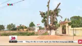 Xem Xét Trách Nhiệm UBND Thạch Thất Trong Vụ Việc Chặt Cây - Tin Tức VTV24