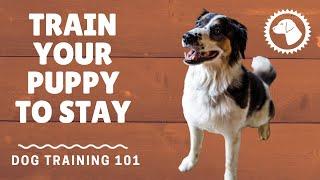 Basic Dog Training Commands: Stay | DOG TRAINING 🐶 Brooklyn's Corner