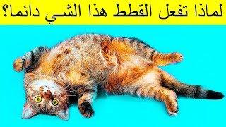 لماذا تنام القطط بهذا الشكل عندما ترى صاحبها ؟