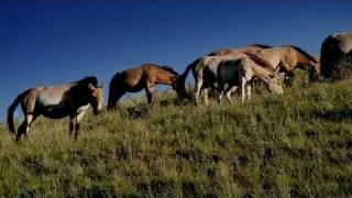 WTM - Wandering Tribe of Mongolia