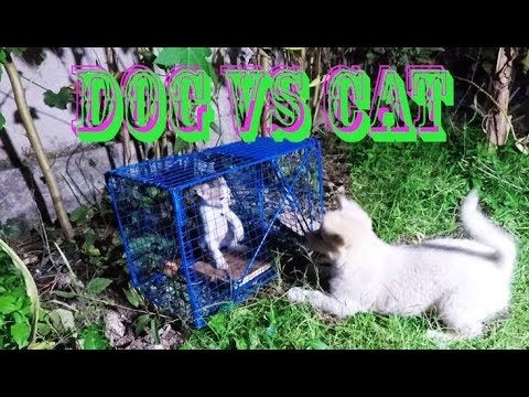 FUNNY Dog and cat - Angry dog Vs cat - Cat trapping! 84