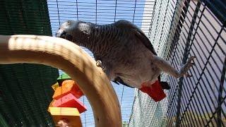 Parrot Perches, Stands, & Cage Setup Ideas