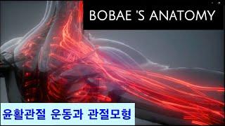 윤활관절 운동과 관절모형