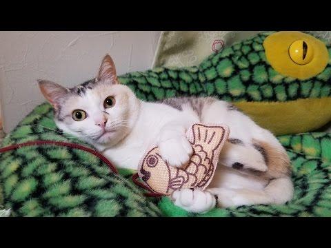 マタタビ入りたい焼きの虜になった猫【ネコ吉LIFE part5】Cute Cat Videos part5