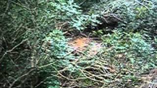 Repeat youtube video fadaih tanger ghabat hawara