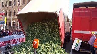 """Más de 10.000 personas y medio millar de tractores exigen en Murcia precios """"justos"""" para el se"""