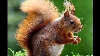 Trois écureuils - Jacky Galou