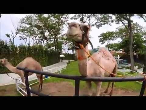 GoPro hero4 ท่องเที่ยวคาเมลหัวหัน+ที่พักหัวหินสระน้ำ ;-)