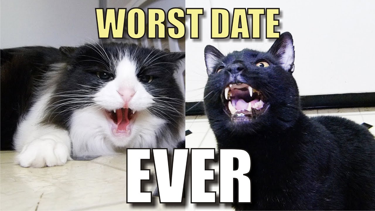 Youtube dating video cat lady
