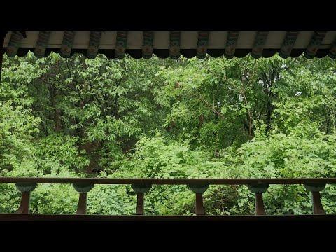 8시간 한옥 처마에서 숲속으로 내리는 비오는 소리 ASMR - 휴식,명상,공부,집중,수면,독서 그리고 마음의 안정