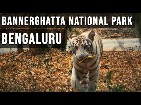 BANGALORE - BANNERGHATTA NATIONAL PARK IN 4K | LION AND TIGER SAFARI | SILICON VALLEY OF INDIA