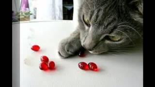 витамины для кошек биоритм купить