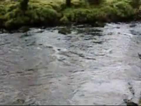 Nickel Creek ~ Flow Gently Sweet Afton