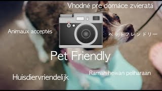Let's Guide People with Pets - Photos on Google Maps, Ep. 2