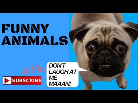 FUNNY ANIMALS COMPILATION II FUN FAILS MOMENTS