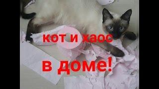 Хотите завести кошку? Смотрите что вас ждёт!