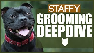 How To Groom Your STAFFORDSHIRE BULL TERRIER  GROOMING DEEPDIVE