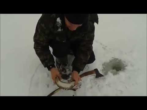снасть для ловли налима на течении