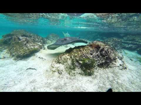 Atlantis Bahamas GoPro Hero4 Silver