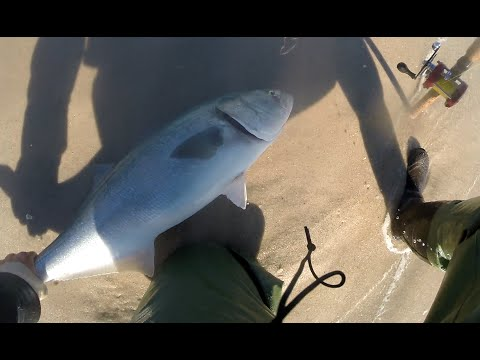 Abu Garcia Ambassadeur BRUTAL Bluefish Beach Surf Fishing