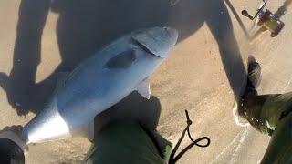 Abu Garcia Ambassadeur BRUTAL Bluefish Beach Surf Fishing