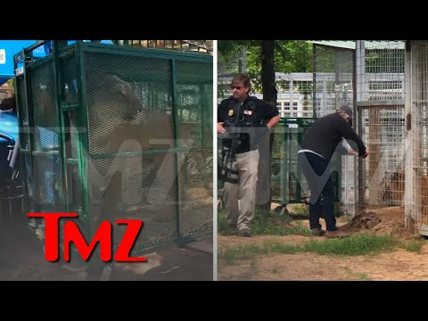Jeff-Lowe-Says-Feds-Seizing-Animals-at-His-Zoo-Video-of-Big-Cat-Being-Hauled-Away-TMZ