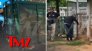 Jeff Lowe Says Feds Seizing Animals at His Zoo, Video of Big Cat Being Hauled Away | TMZ