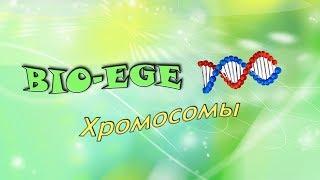 Bio-ege   Урок №4 Хромосомы готовимся к ЕГЭ биология