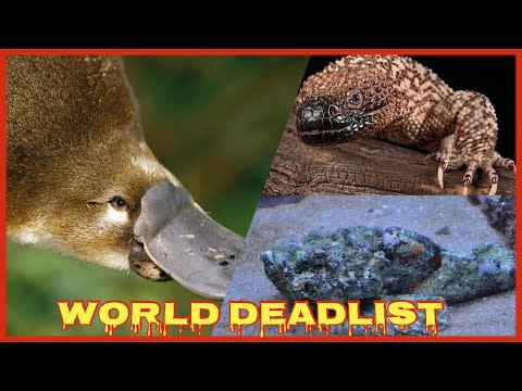 Download The 10 Most Venomous Animals In The World--Part 02