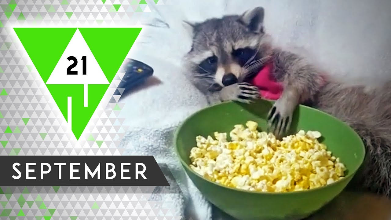 WIN Compilation SEPTEMBER 2021 Edition   Best videos of the month August