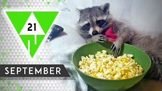 WIN Compilation SEPTEMBER 2021 Edition | Best videos of the month August