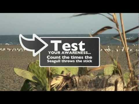 Visual Awareness Test - Are You Ready? - Take a Test