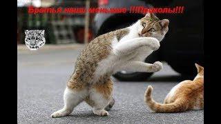 #приколы#животные Братья наши меньшие !!!Приколы!!!