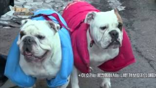 EBS1 세상에 나쁜 개는 없다-장미여관 강준우, 불독과 산다
